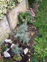 Pretty in pink & the makings of a rockery.