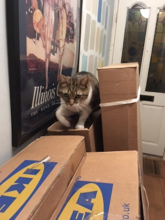 Cat enjoying the flat pack furniture boxes